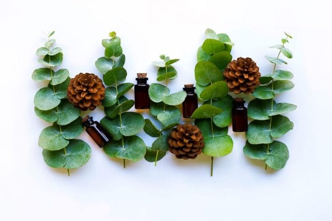 Using Eucalyptus Oil For Your Teeth