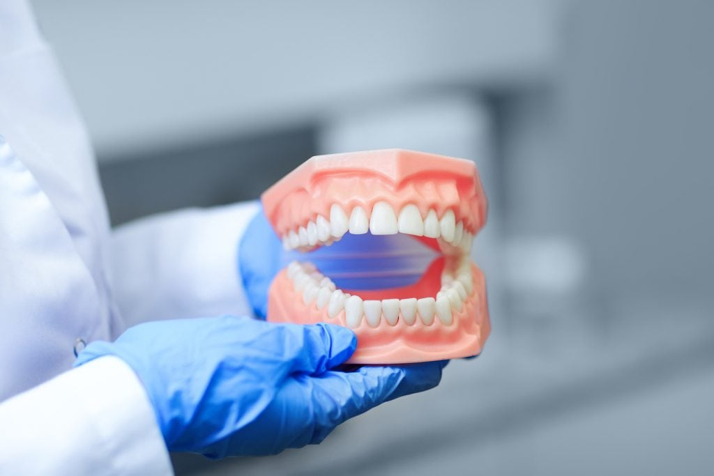Dentist with 3-D model of teeth